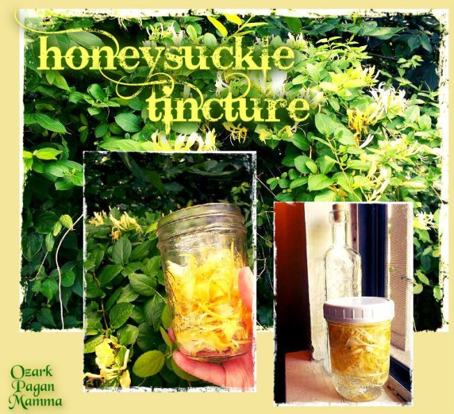 honeysuckle tincture