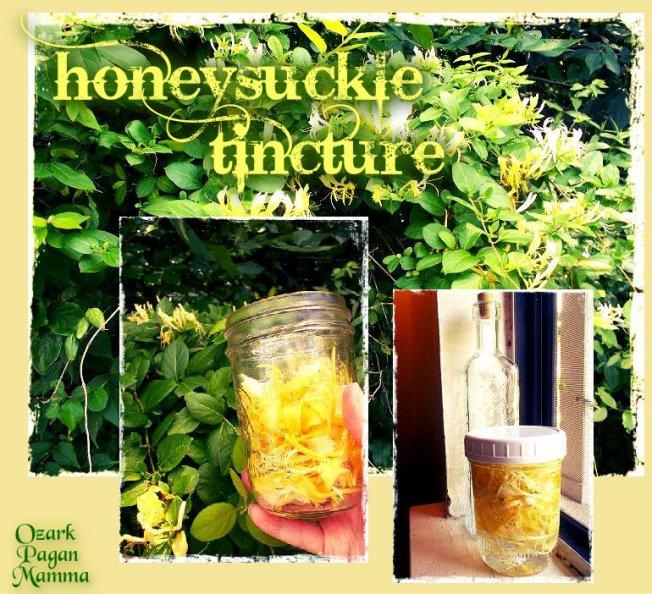 honeysuckle tincture